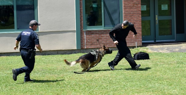 A muzzled police dog chases a New York State trooper, followed by his human partner, as part of a K 9 demonstration during the Youth Police Academy at Vestal High School on July 11, 2018